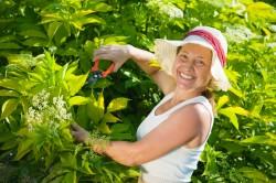 Happy woman cutting cornus