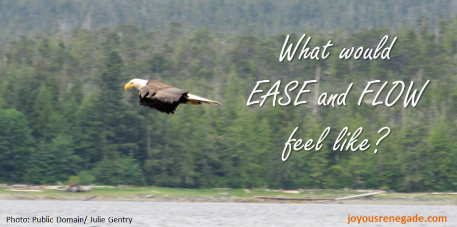 Bald eagle soaring on a wind current - ease and flow